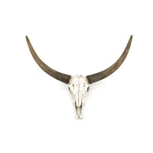 Ox head skull By Boo