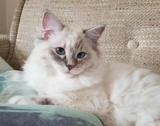 Comment puis-je protéger mes meubles contre les chats?