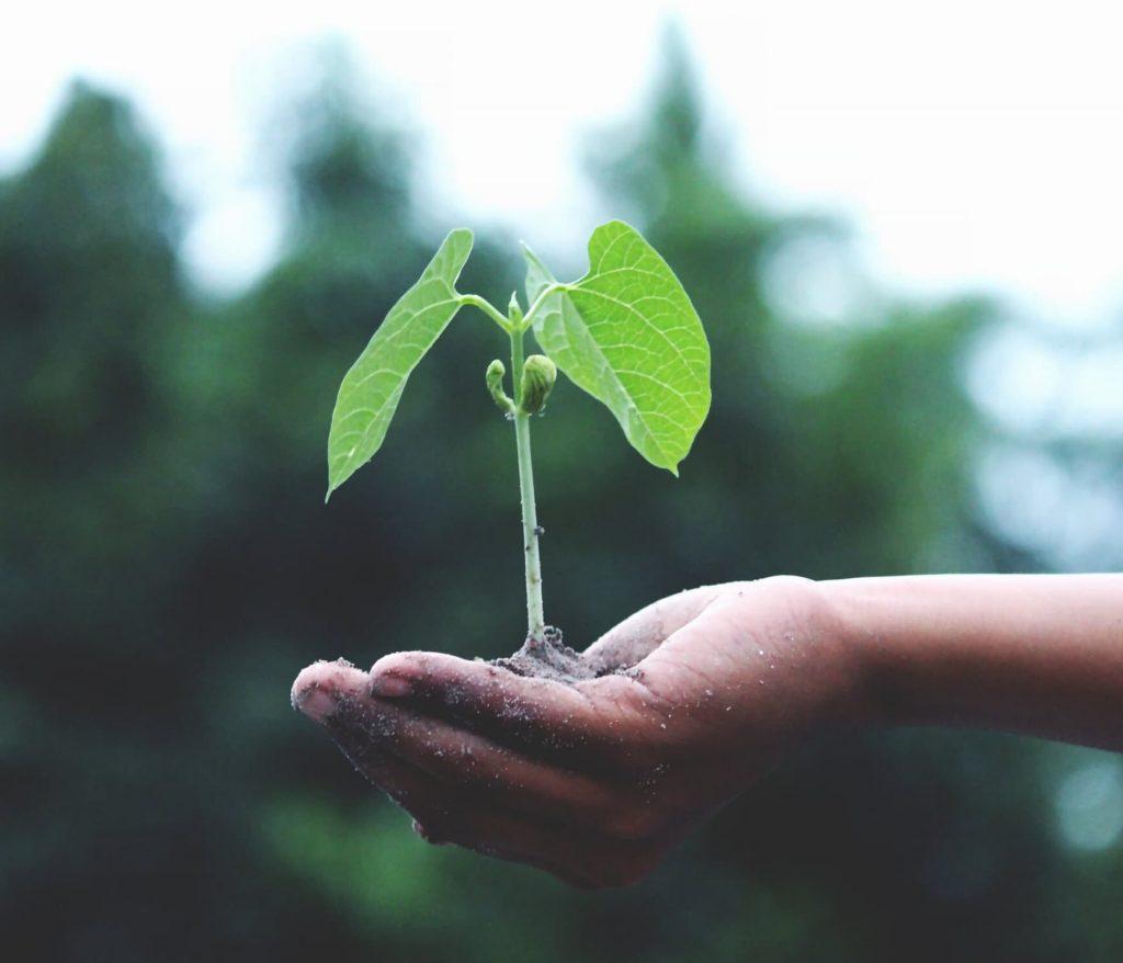 duurzaam en verantwoord leven