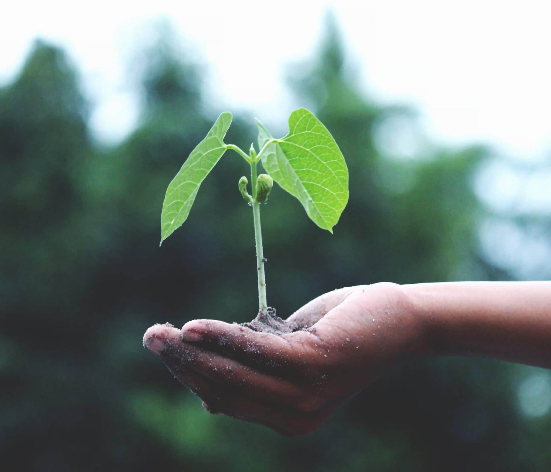 Créer un intérieur durable et responsable avec ces conseils