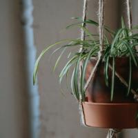 hangplant ophangen